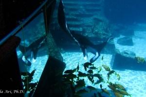 """""""Atlantis"""