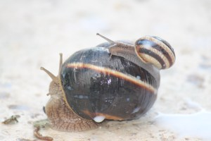 A touching family portrait from the snail colony