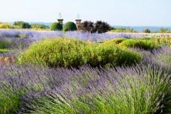 Hotel Cucuron Luberon Provence2