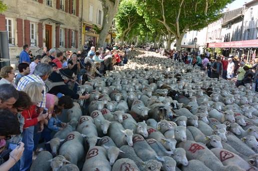 Fete de Transhumance Saint Remy