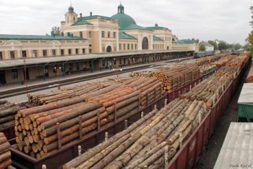 Держфінінспекція в Тернопільській області попередила порушення на ДП «Бучацьке лісове господарство» у сфері держзакупівель на суму 1,7 млн грн