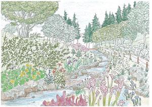 湿生植物区イメージスケッチ