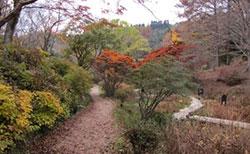 湿生植物区(平成27年11月撮影)