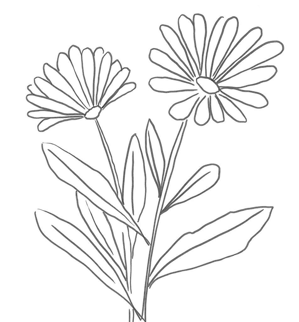 Margherita Disegno Da Colorare Disegno Di Fiore Di Margherita