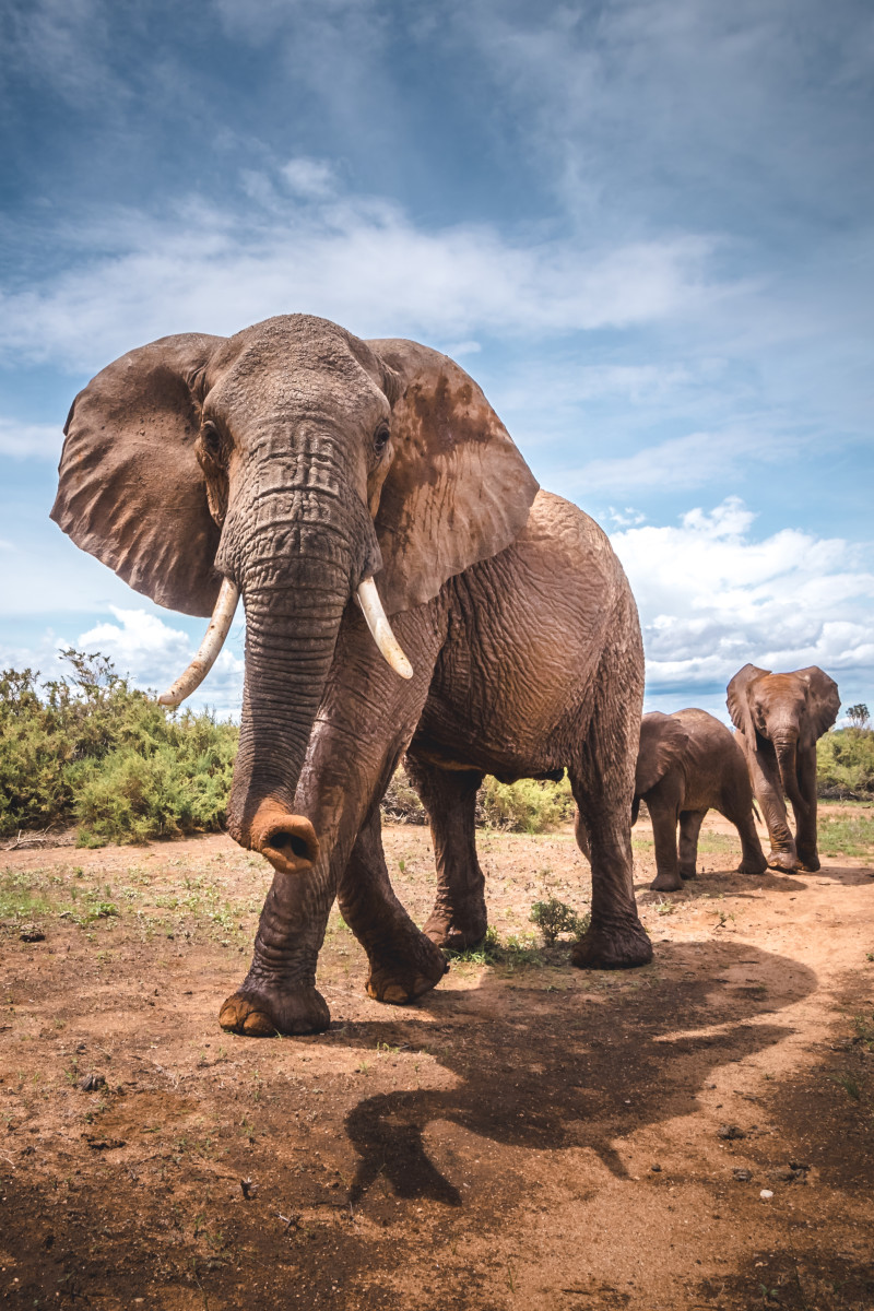 Photos éléphants Could Earthquake Monitoring Technology Help Save Elephants