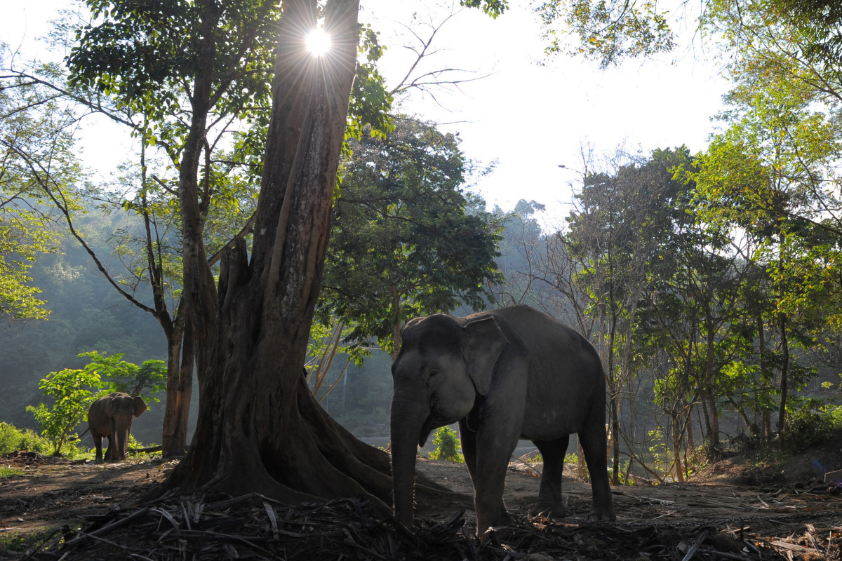 Photos éléphants Measuring The Ecological Impact Of Losing Forest Elephants