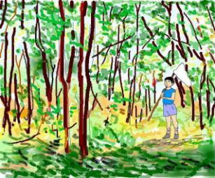 雑木林で虫取り
