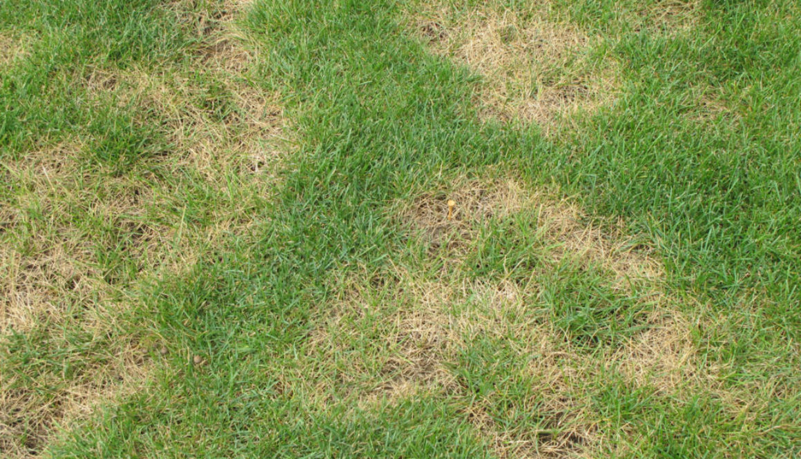 Turf Diseases \u2013 for professional turfgrass managers
