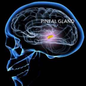 DMT Found in the Pineal Glands of Live Rats