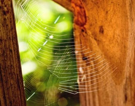 Spiderwebs under the porch railing.