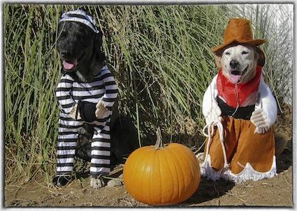 dog-diy-costume
