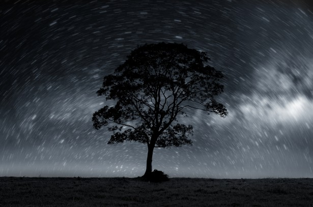 Stock Images Of Galaxy Night Sky With Lonely Tree Free Stock Photo Public