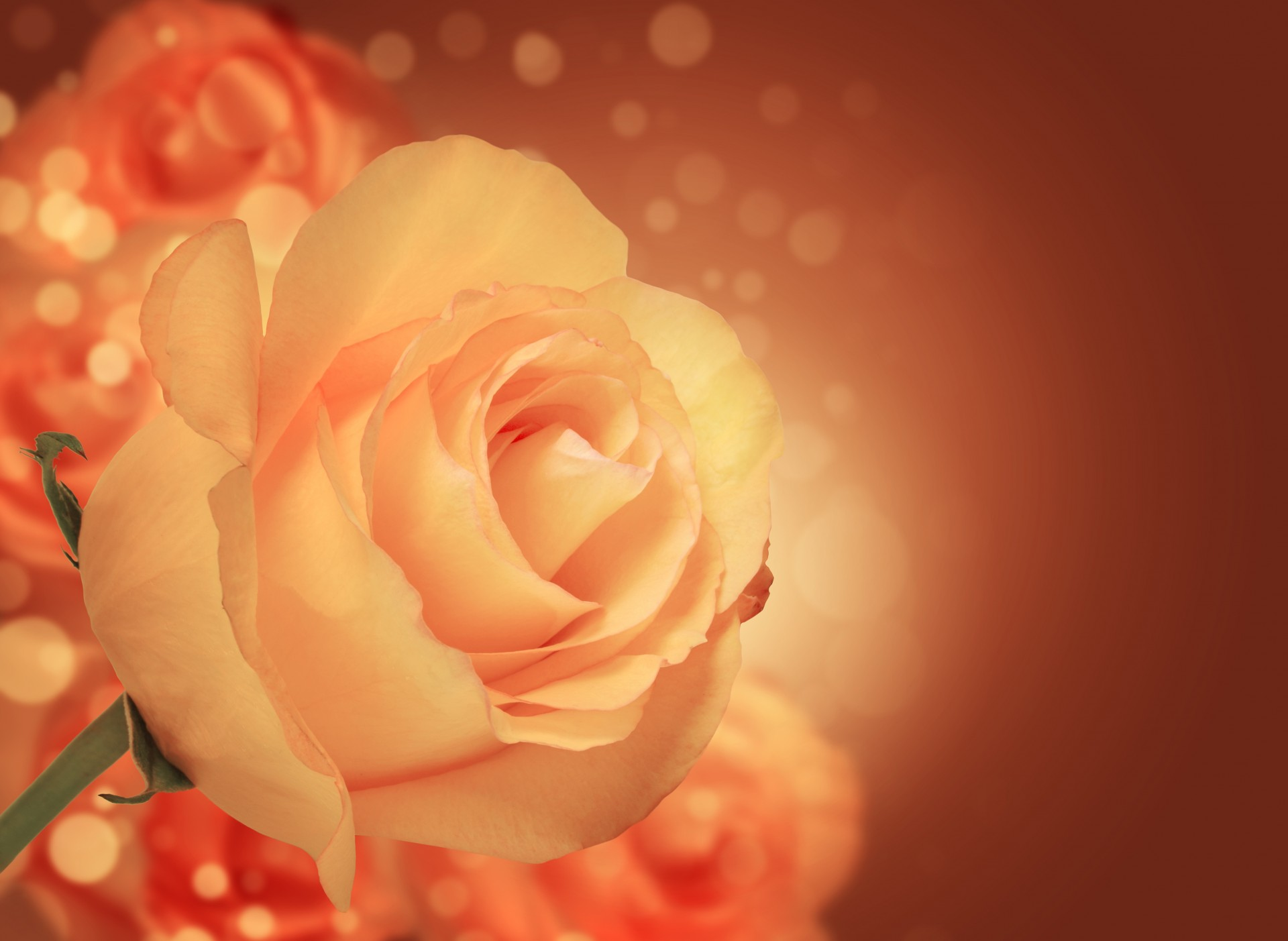 Vintage Fall Wallpaper Background With Rose Free Stock Photo Public Domain Pictures