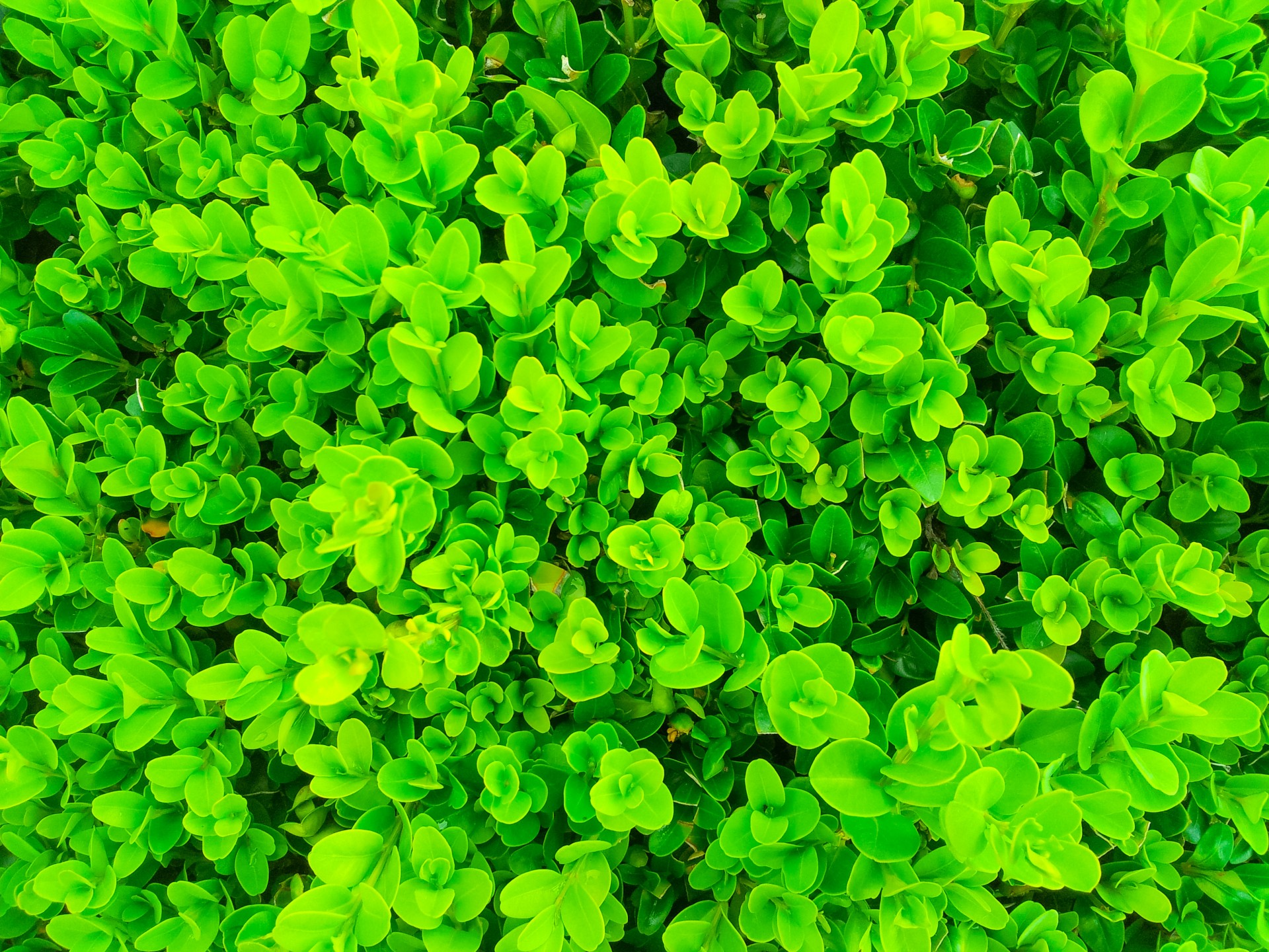 Green Houseplants Green Plants Pattern Free Stock Photo Public Domain Pictures