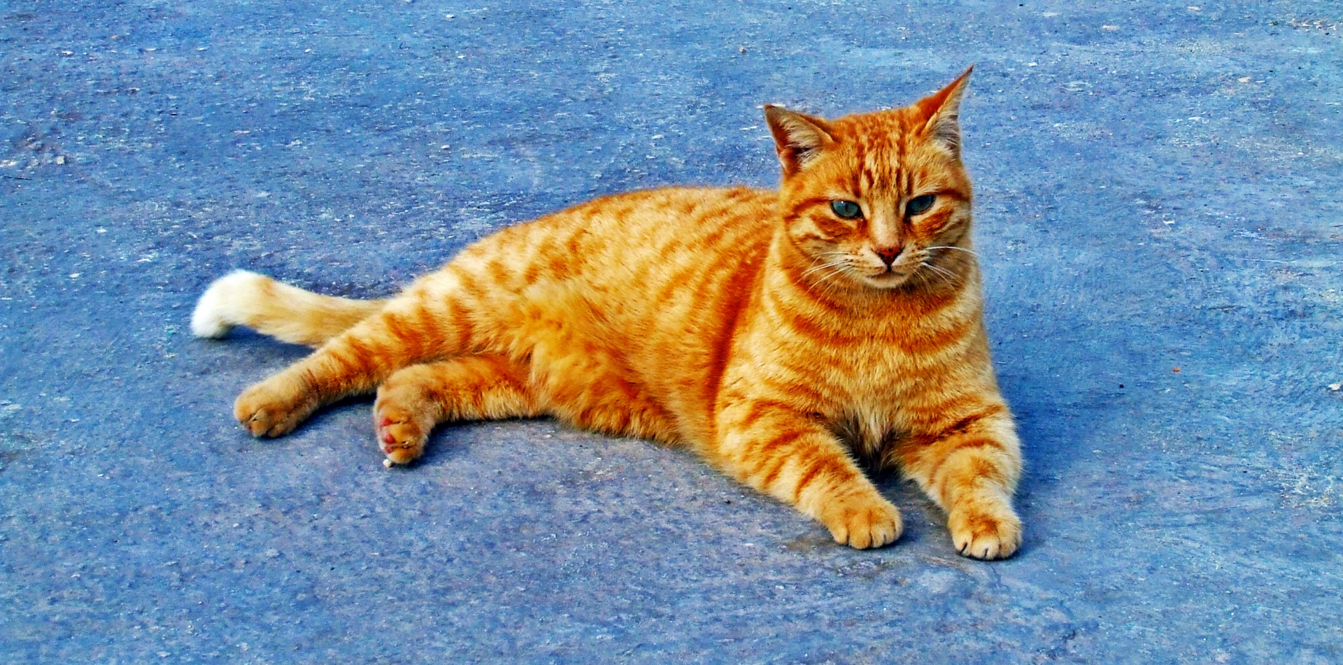 Cute Kitty Wallpapers Download Ginger Cat Free Stock Photo Public Domain Pictures