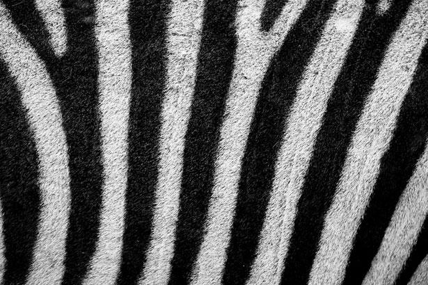 S 3d Wallpaper Hd Zebravacht Gratis Stock Foto Public Domain Pictures
