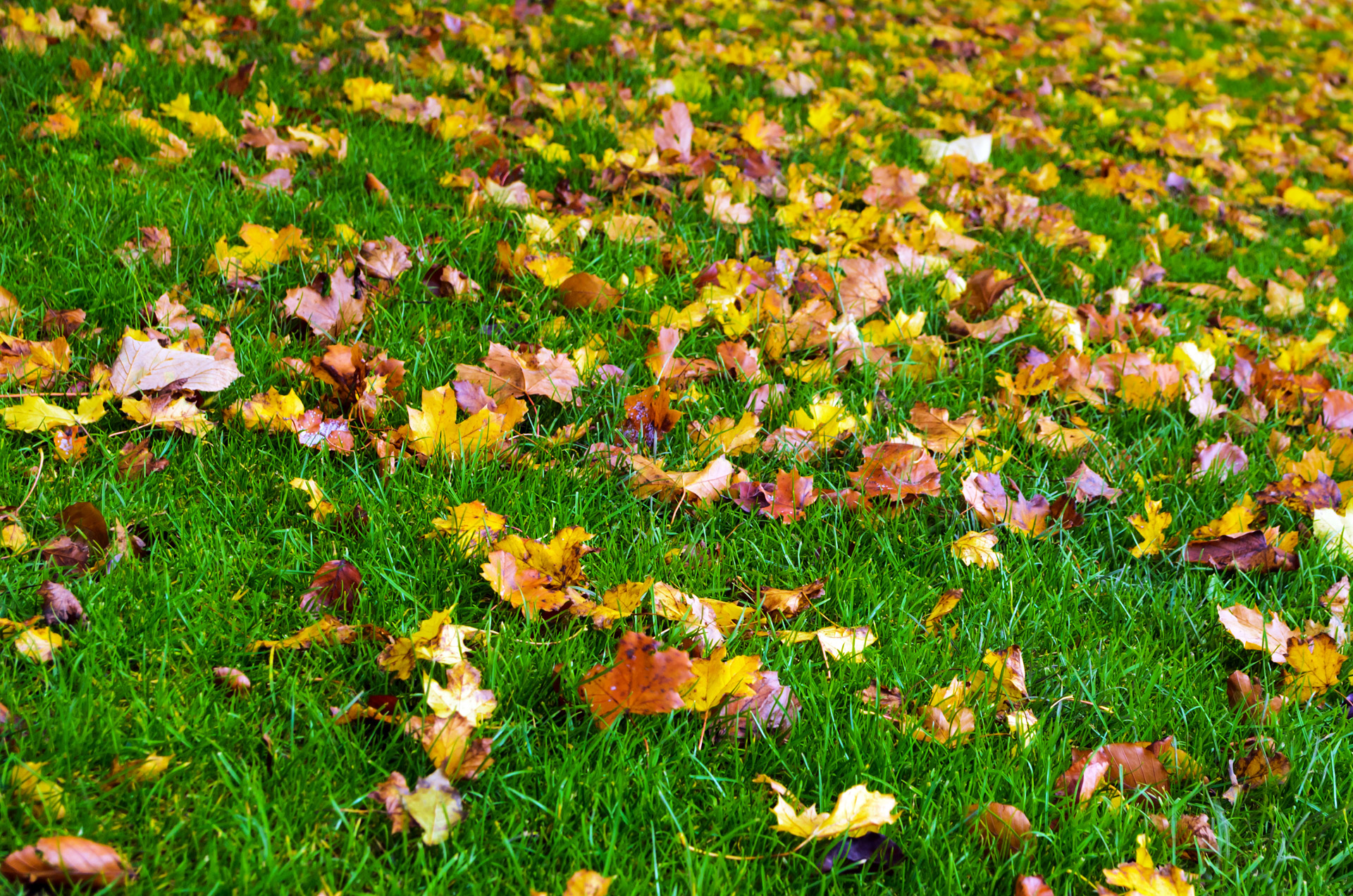 Wallpapers For Desktop Fall Colors Autumn Background Free Stock Photo Public Domain Pictures