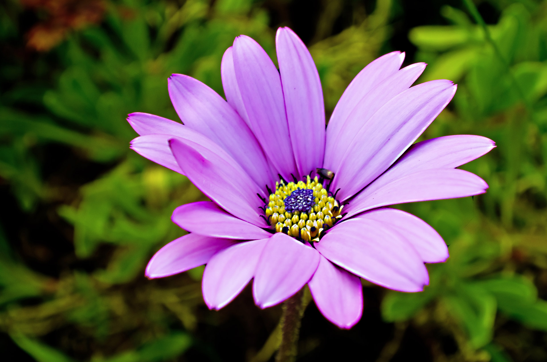 Nice Plants Nice Flower Free Stock Photo Public Domain Pictures