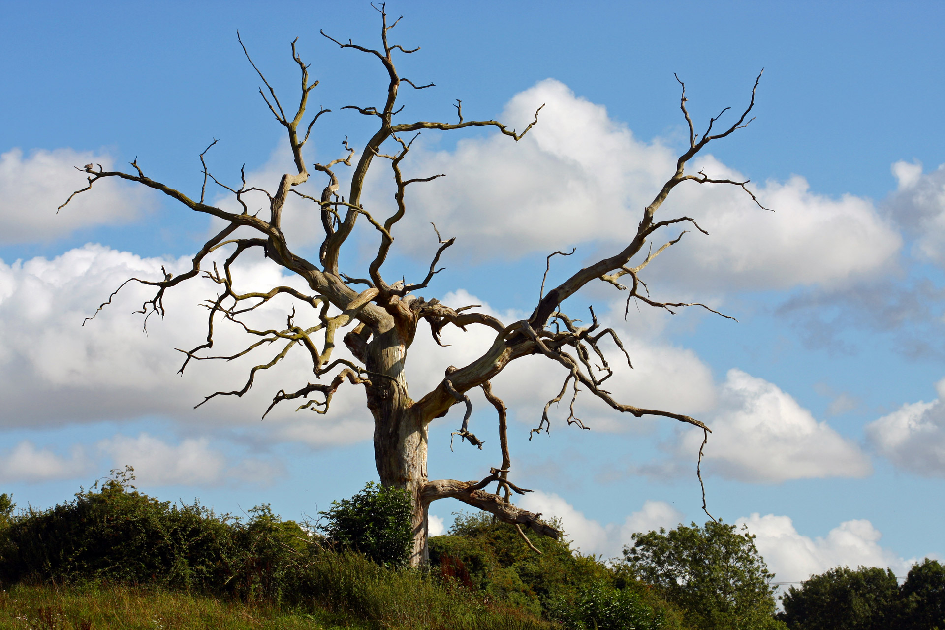 Sky Hd Wallpaper Dead Tree Free Stock Photo Public Domain Pictures