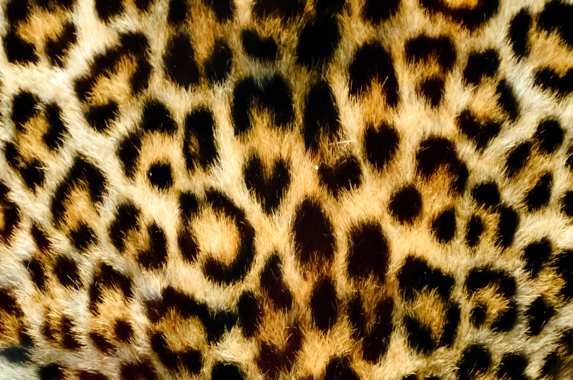 Iphone X Wallpaper Stock Hd Leopard Background Free Stock Photo Public Domain Pictures