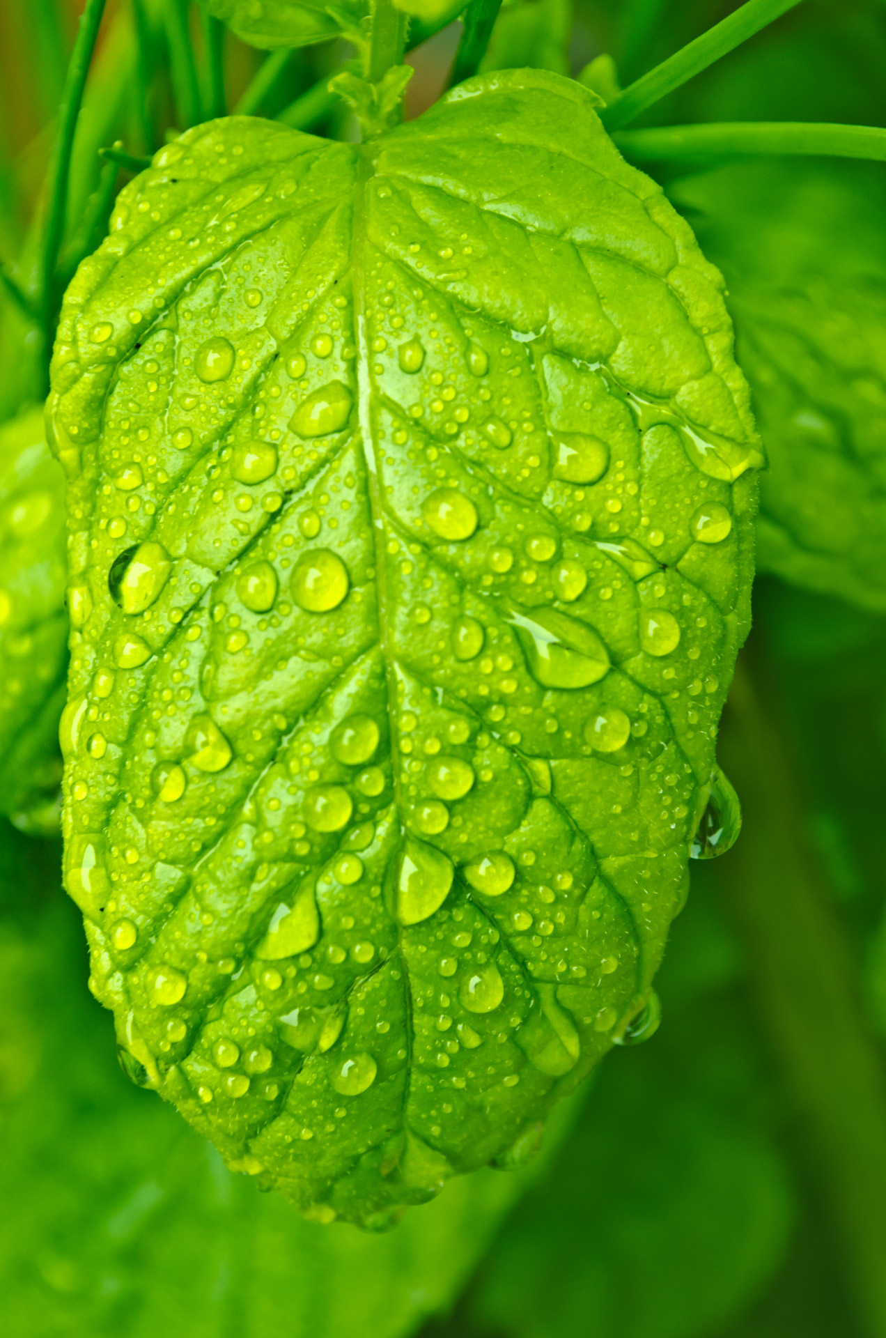 Beautiful Wallpaper Hd With Quotes Water Drops On The Leaf Free Stock Photo Public Domain