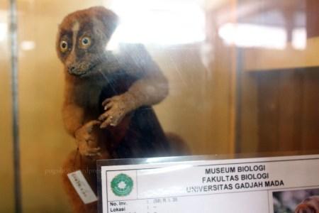 Koleksi Di Museum Biologi Yogyakarta
