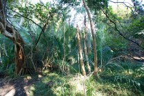 Rainforest around Victoria Falls