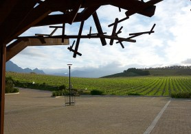 Waterkloof vineyards