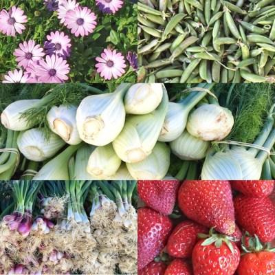 Farmers-Market-bounty