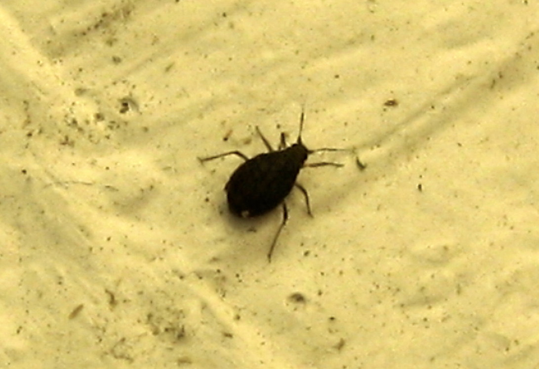 Small Black Flies In Kitchen Tiny Ant Like Bugs In Bathroom
