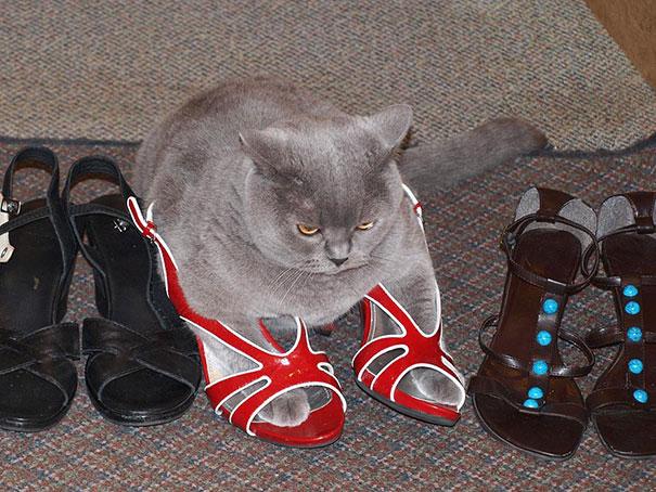 funny-cats-if-it-fits-i-sits-15