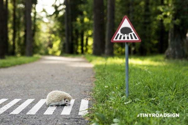 55b943e37dd85 - Hedgehogs, Cats, And Ducks Get Own Tiny Crosswalks In Lithuanian Town Where All Creatures Are Equal