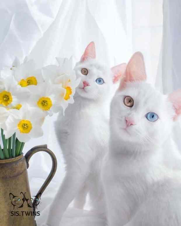 57a868c4e2987 - Cutest Cats in the World