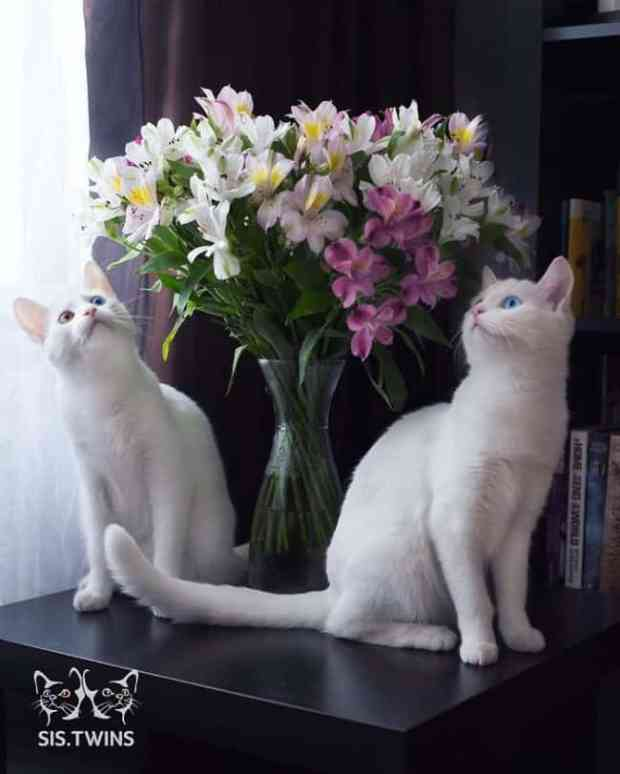 57a868c728c1e - Cutest Cats in the World