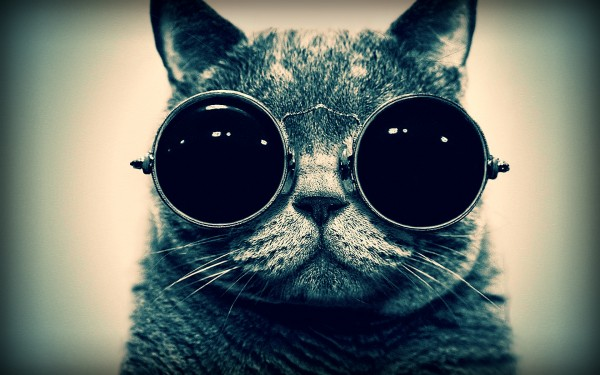cat_eyes_glasses