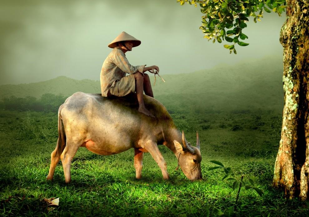 grandpa-old-shepherd-buffalo-46152