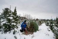 Christmas Tree 2014 - 5