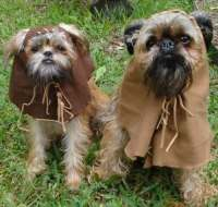 5 Awesome Star Wars Dog Costumes