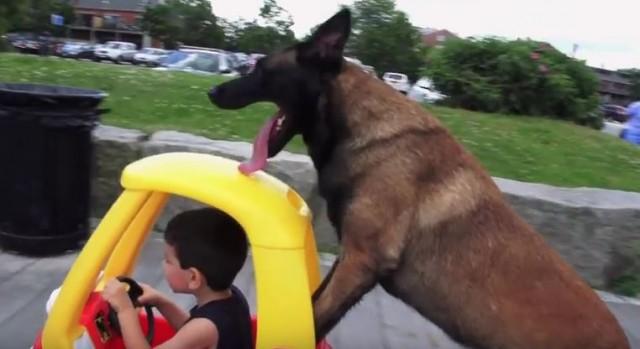 Dog Shows Us What an Amazing Babysitter Looks Like - pet babysitter
