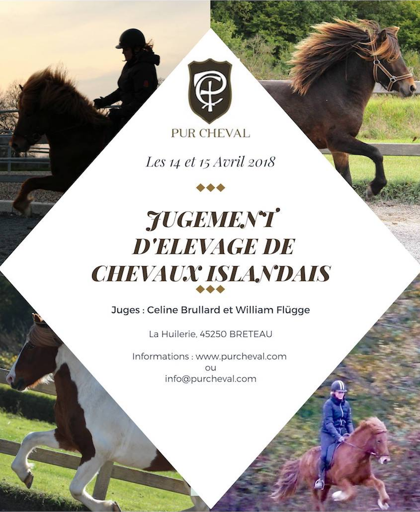 Affiche Cheval Affiche Jugement Elevage Pur Cheval Pur Cheval