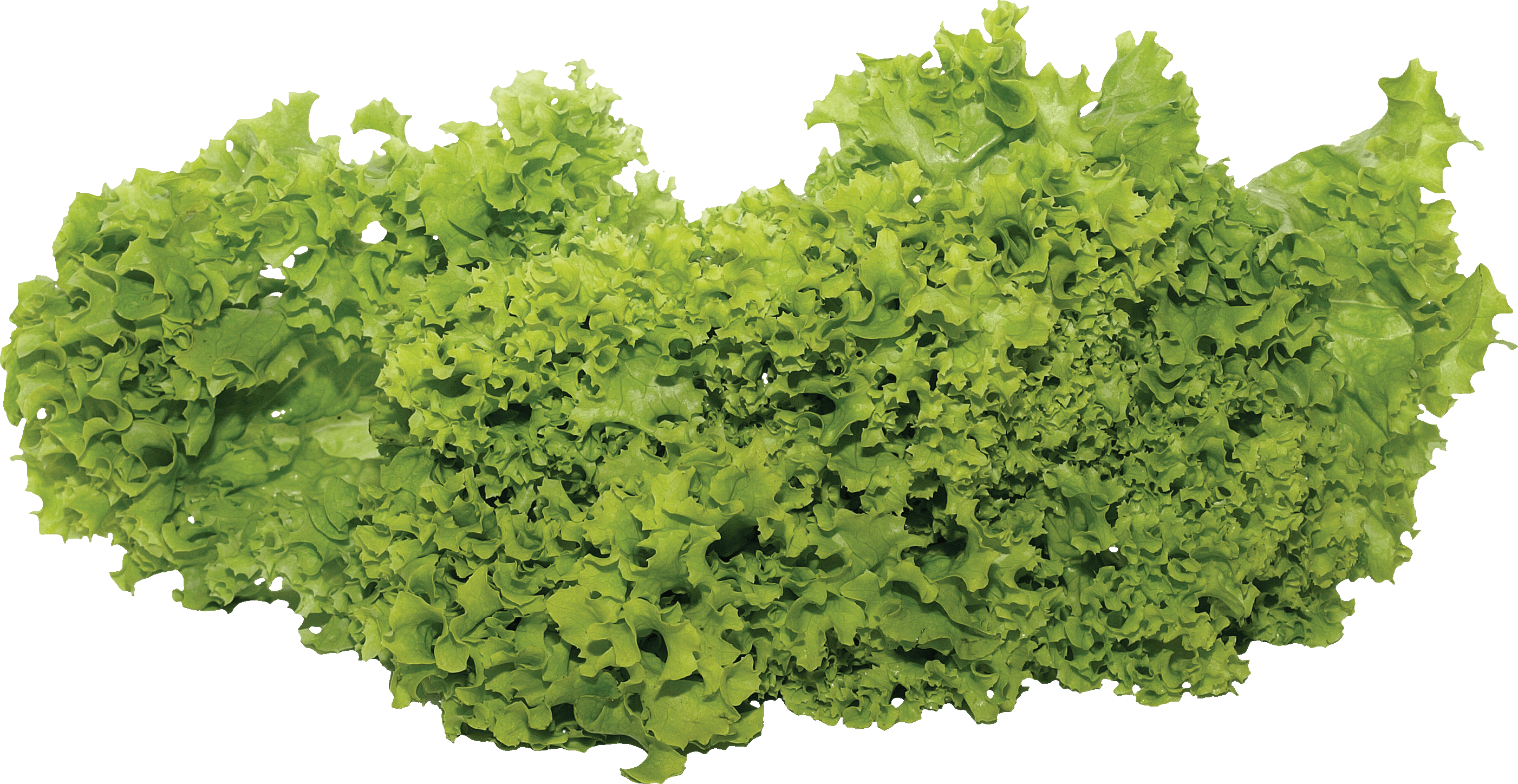 Flower Plant Top View Png Salad Png Image Purepng Free Transparent Cc0 Png Image