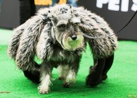 The 38 Best Halloween Costumes for Dogs - PureWow