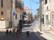 Doggiwalker in Tel Aviv
