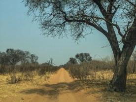Sandweg nach Savuti