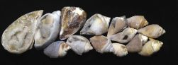 shells-banner