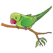 parrot-riddle