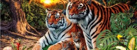how many tigers