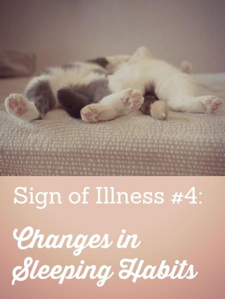 Ibd Disease In Cats