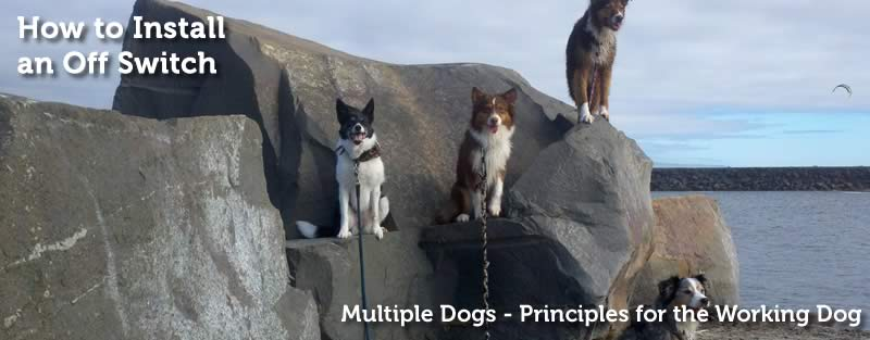 Principles for the Working Dog