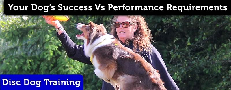 Success vs Performance in Dog Sports